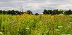 Wildflower Walk by SCPhotoArtRedux