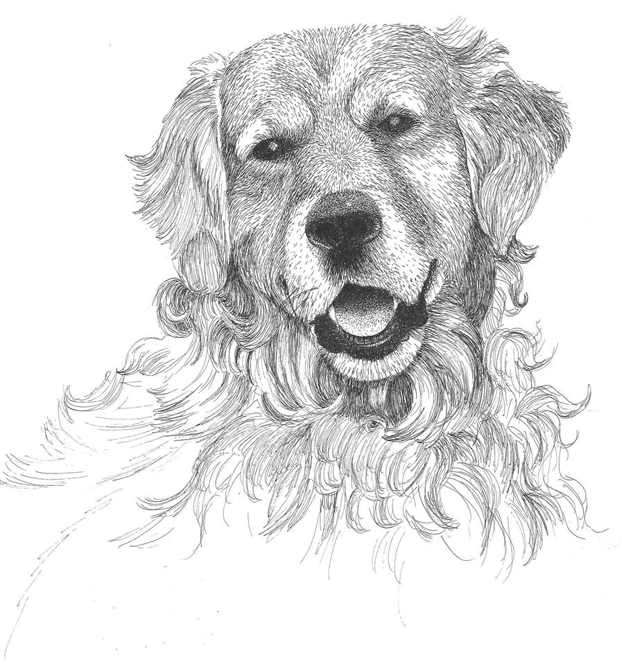 Line Drawing Golden Retriever : Golden retriever by purple polkadots on deviantart