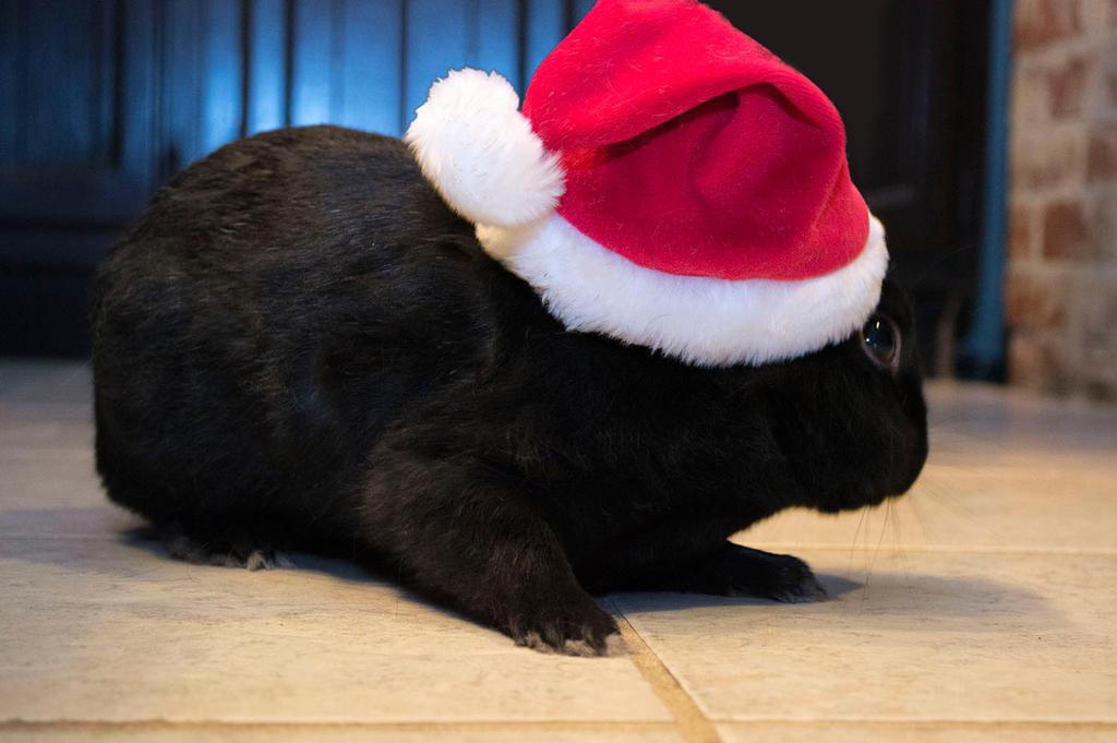 Christmas Geordi by Swaptrick