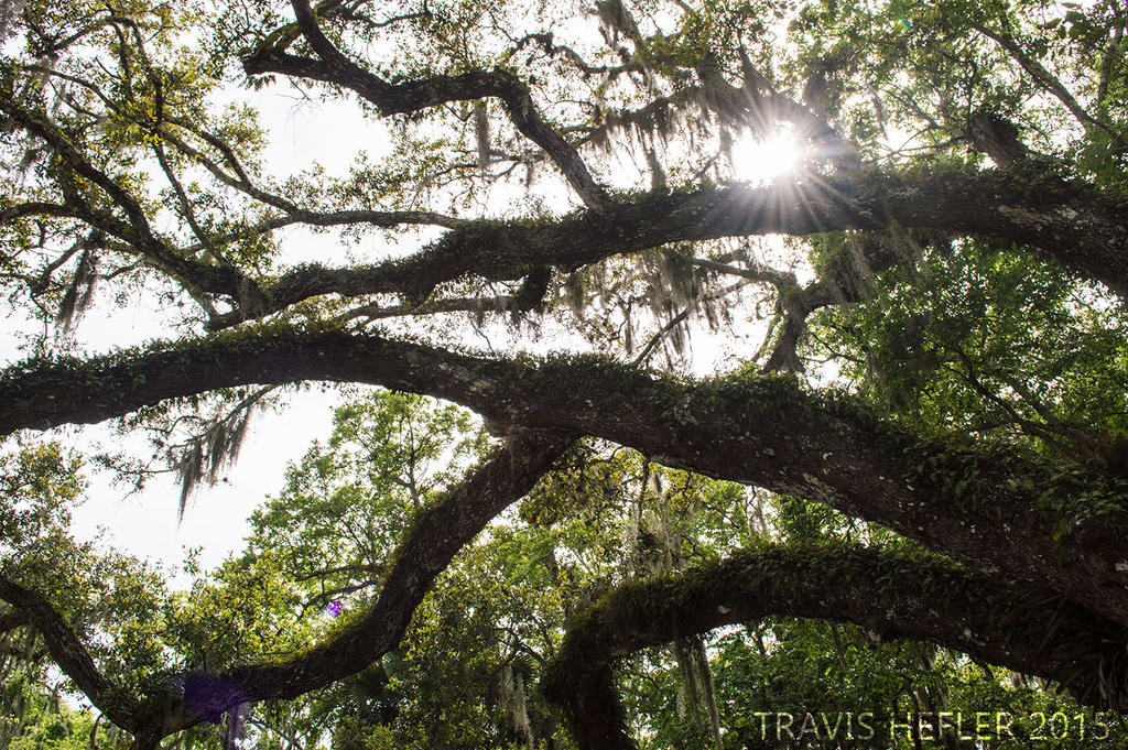 Through the canopy by Swaptrick