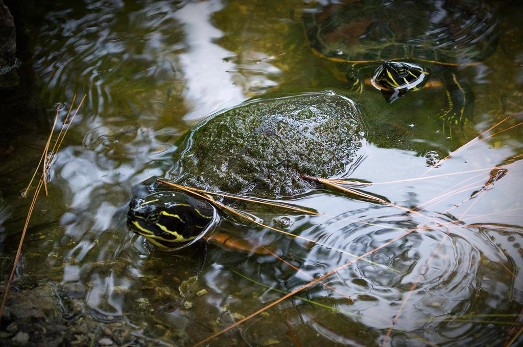 Turtles by Swaptrick