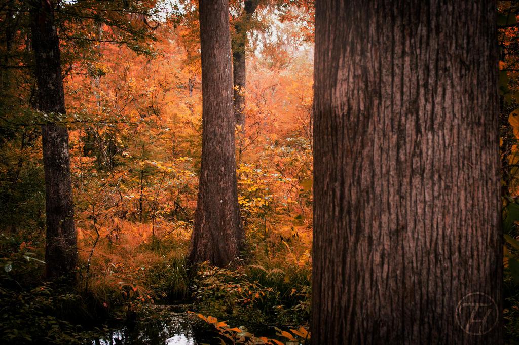 Orange Marsh by Swaptrick