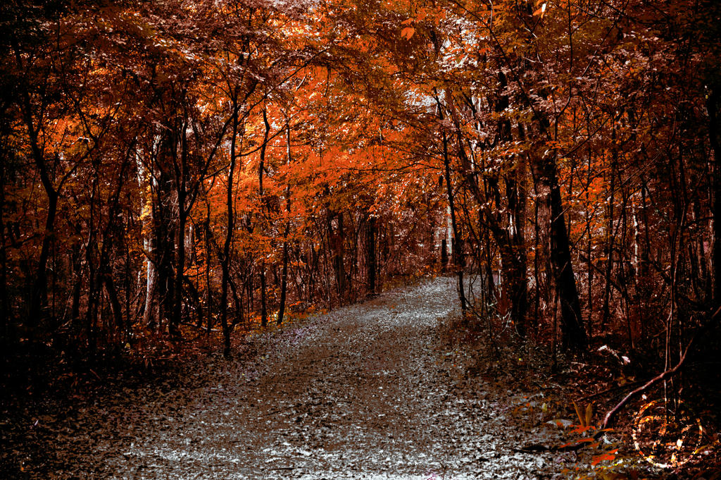 Golden Path by Swaptrick