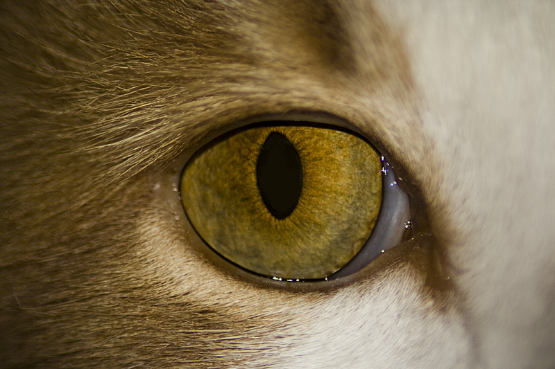 The_Cats_Eye_by_Project_Ian_Carr.jpg