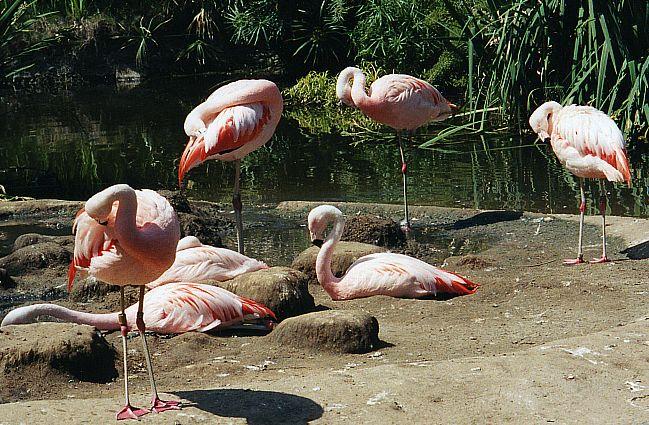 Flamingos by sweetaj6