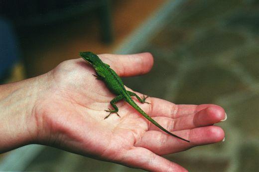 Lizard by sweetaj6