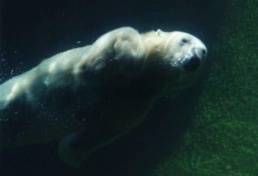 Polar by sweetaj6