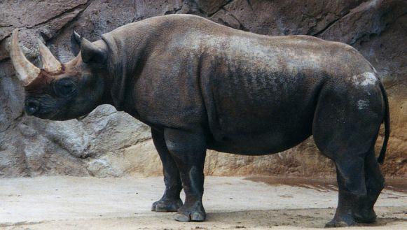 Rhino by sweetaj6