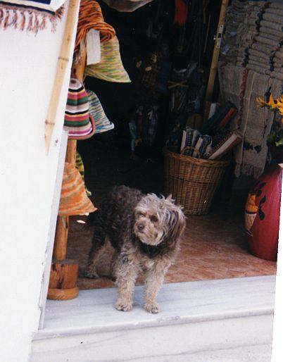Puppy by sweetaj6