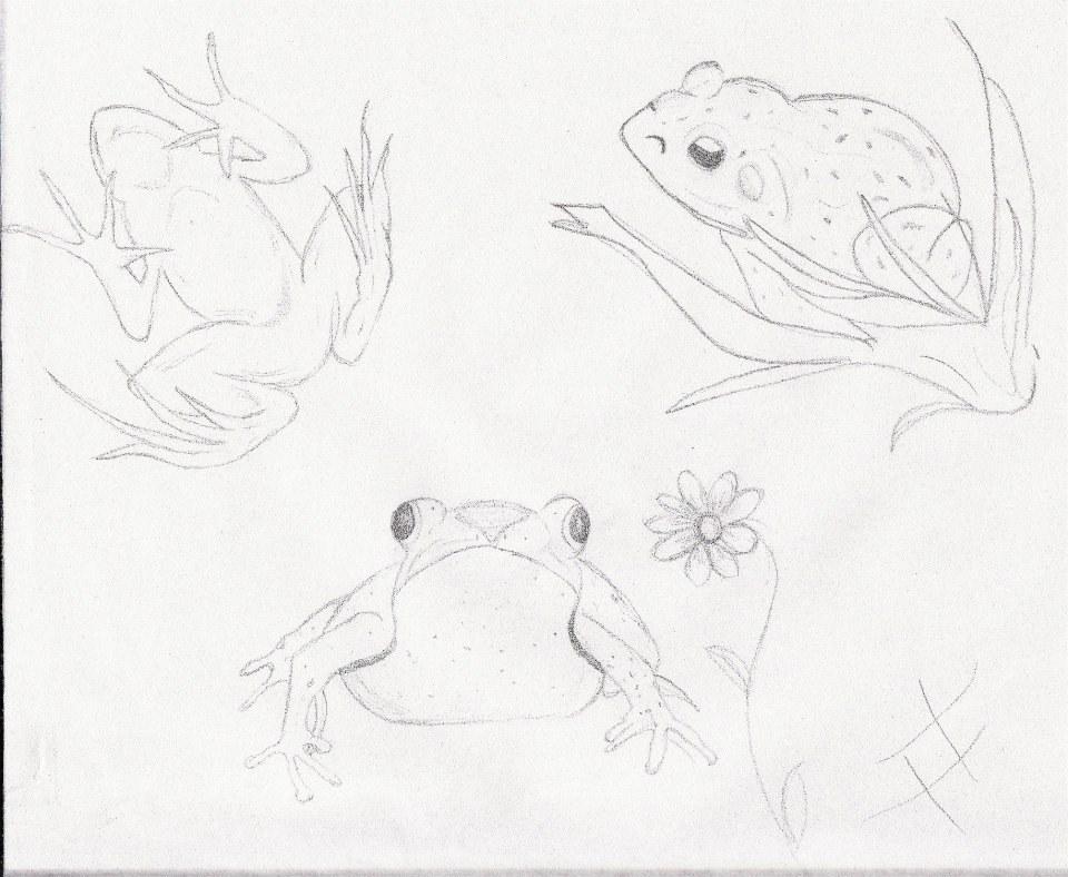 Frogs Are My Favorite! by sweetaj6