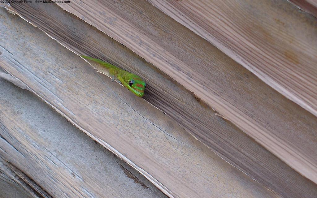 gecko by sweetaj6