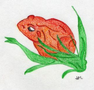 orange frog by sweetaj6