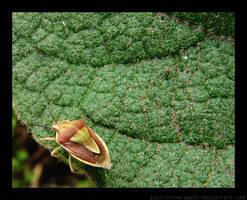 Leaf Fuzz by lostforeveragain