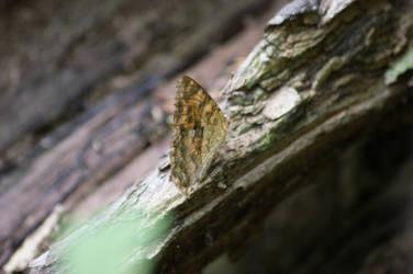 The Hidden Butterfly by DuniopAP