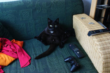 kinky Cat