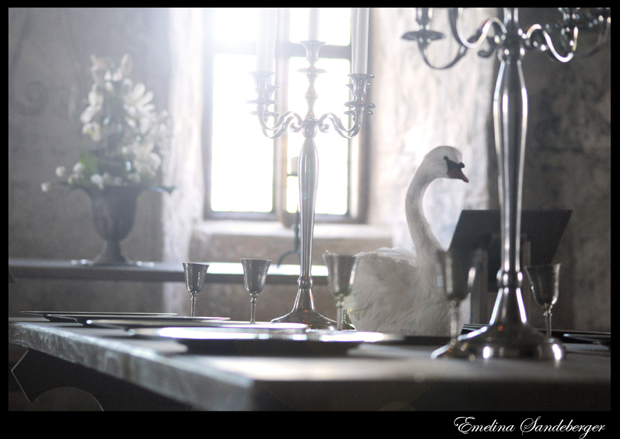 The swan on the table by EmelinaS