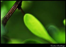 Leaf by EmelinaS