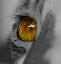 My cat eye