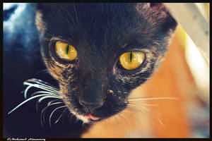 My kitty by MohamedAlmansory