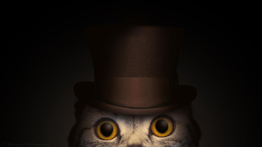 Cat In a Hat by MohamedAlmansory
