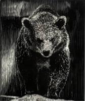 Bear by JamesWest