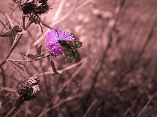 Moth on a flower by tuestunim
