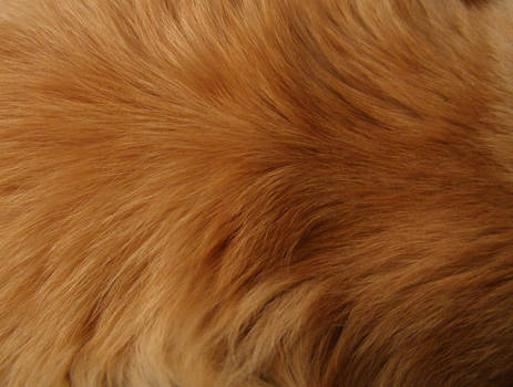 Fur texture II