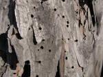 Wood texture 012