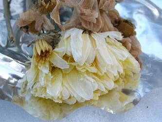 Dead Flowers 2 by AnnFrost-stock