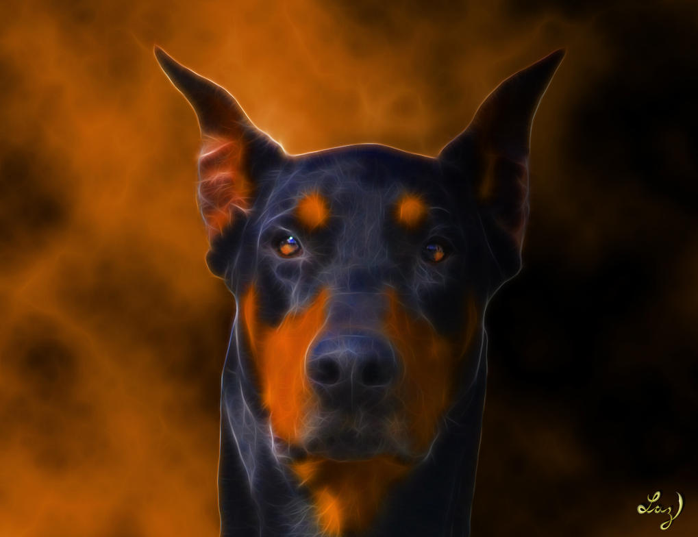 Doberman by Lashington