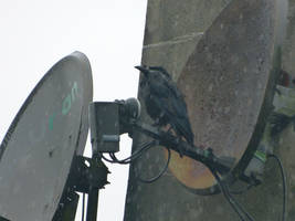 No satellite signal