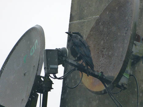 No satellite signal