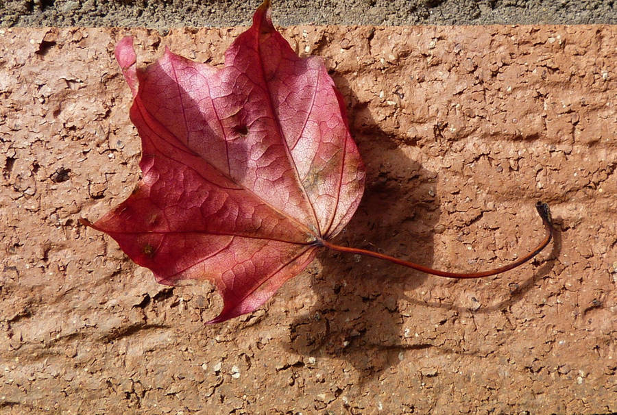 Autumn leaf by setanta5
