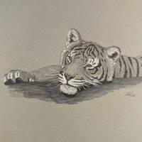 Tiger cub relaxing