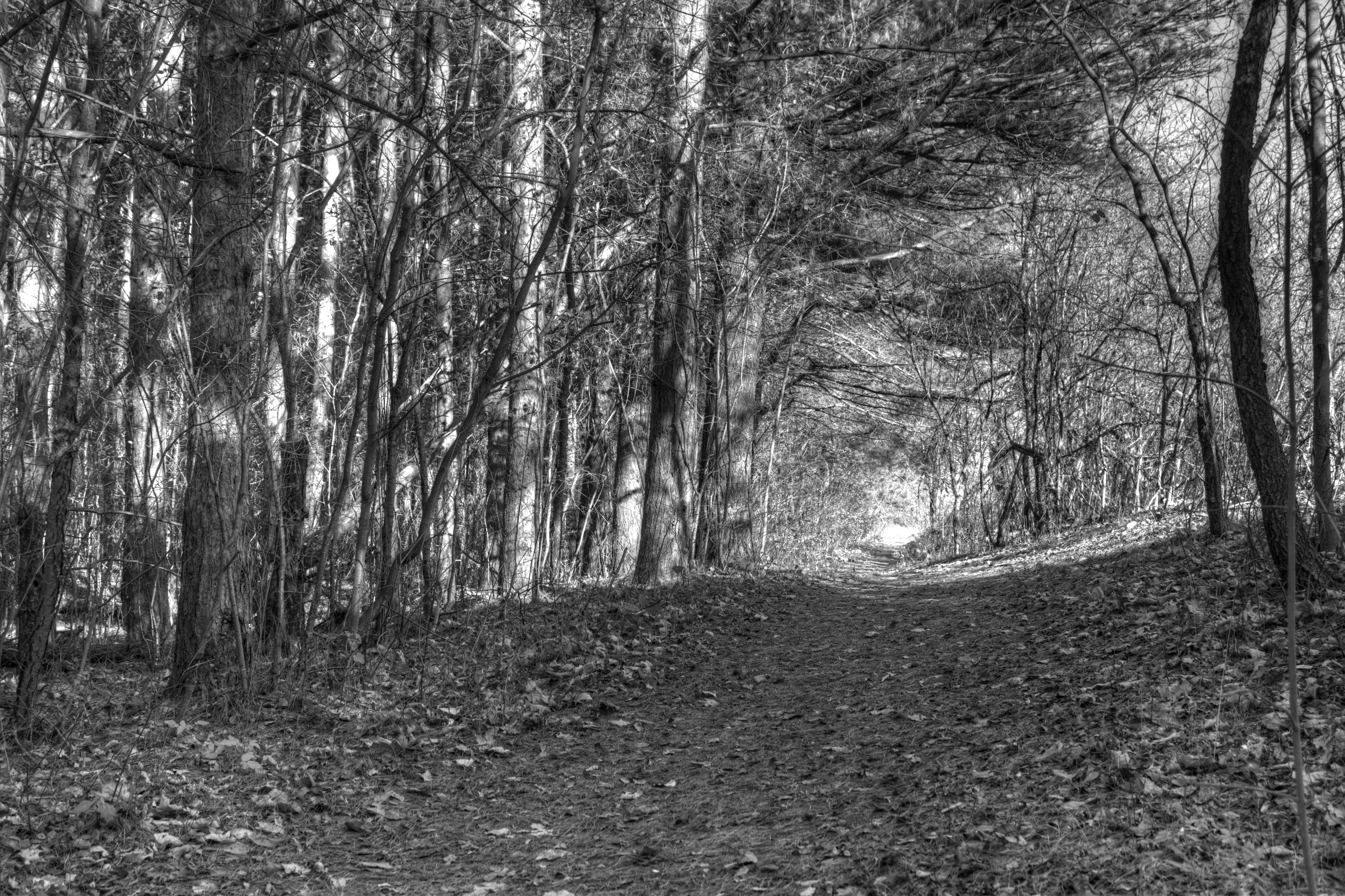 Forest Path by Shouldofducked