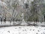 Invierno de Tashkent by SergeyGrey