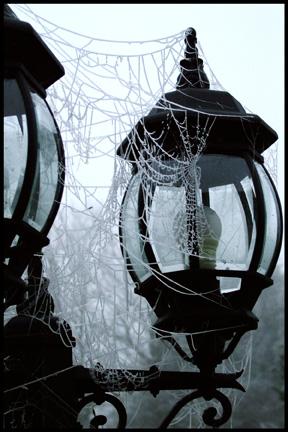 """Obrázek """"http://fc04.deviantart.com/fs15/f/2006/364/5/c/Gothic_Webs_by_SephirothsEvilTwin.jpg"""" nelze zobrazit, protože obsahuje chyby."""