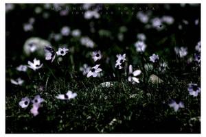 . : Moonlight Sonata : . by kharax