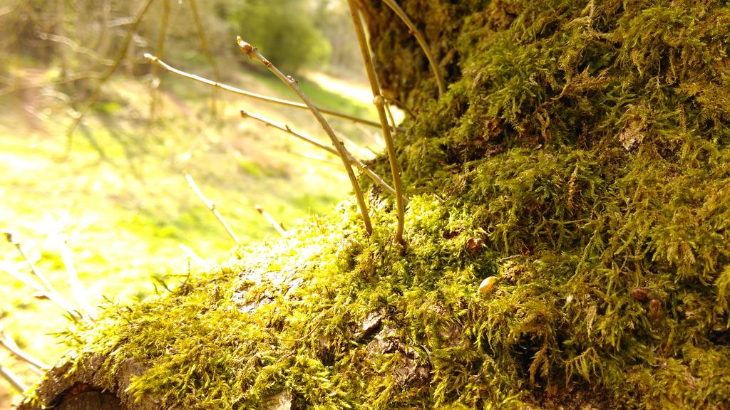 Like, a Tree with Moss On by Miltonholmes