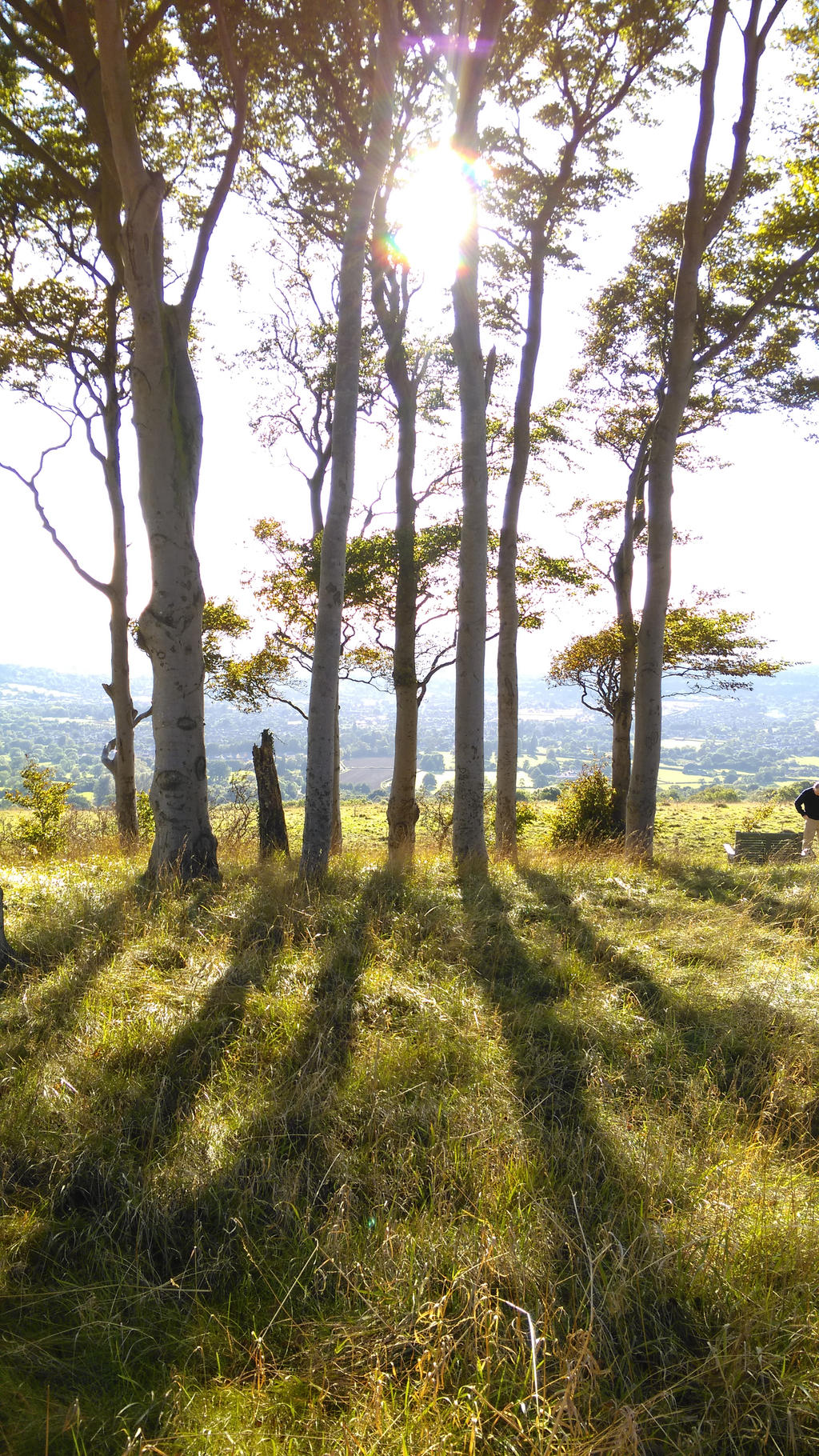 Trees and Shadows on Cleeve Hill by Miltonholmes