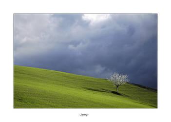 Spring by frescendine
