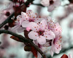 Sping in pink