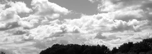 Dtree clouds bw crop 011 by lichtie