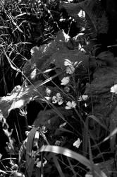 Flowers Burn0020 by lichtie