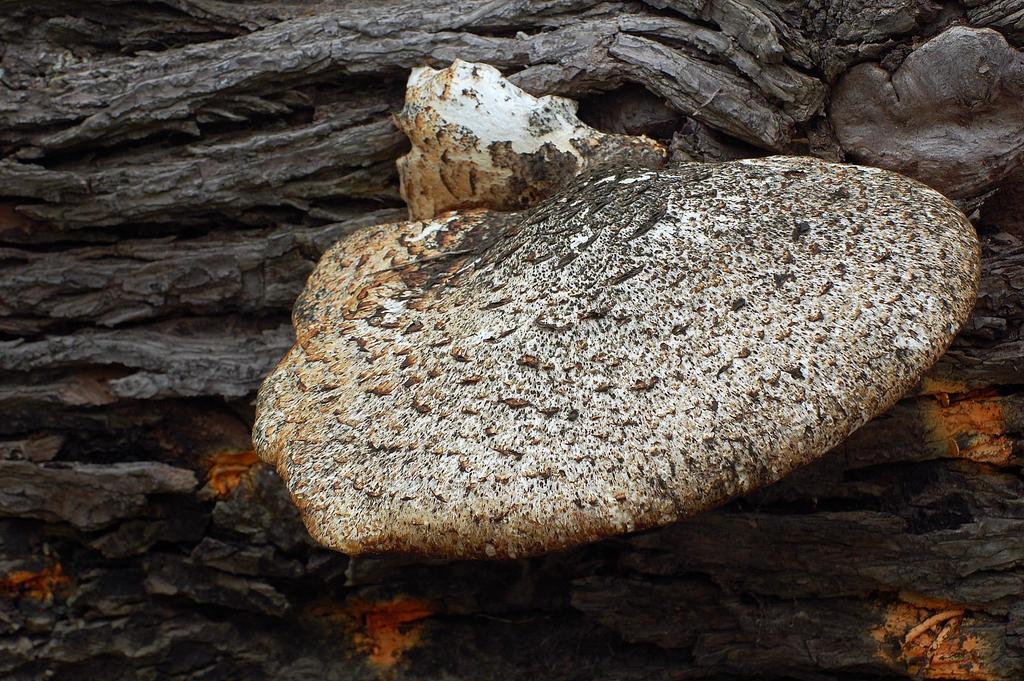 Fungi 044 by lichtie