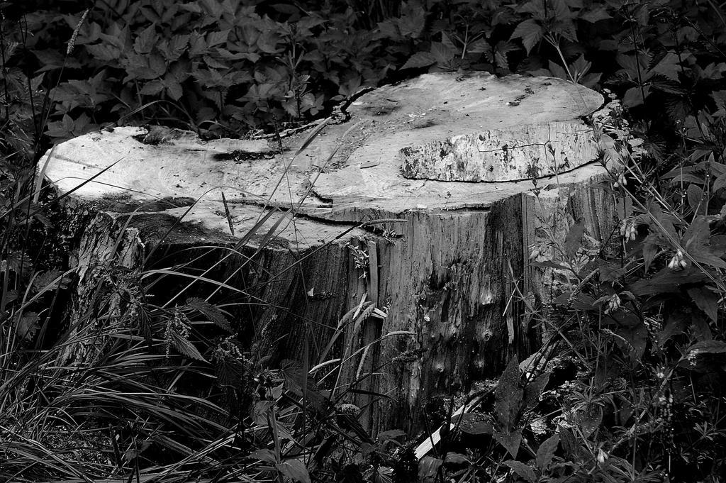 Stumped Bw 070 by lichtie