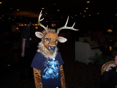 Quite the little Deer