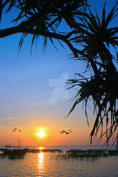Framin sunset