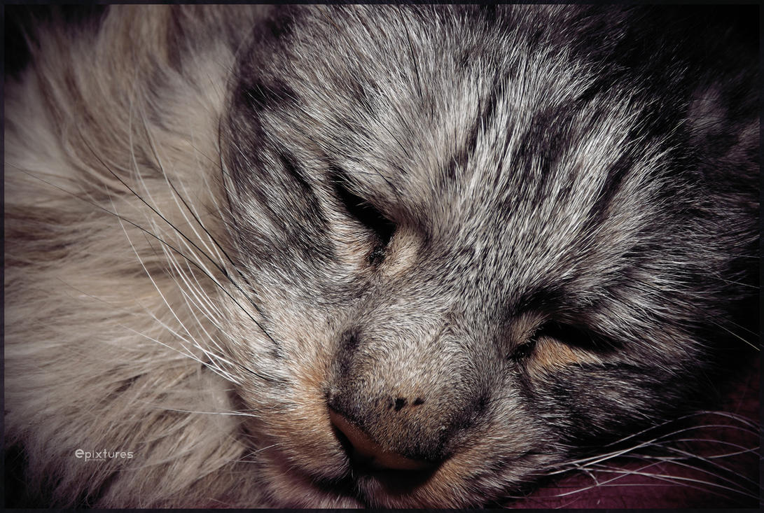 Cat IV by epixtures