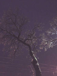 Morning Tree by Rowleys